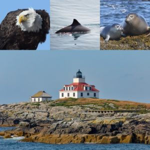 What guests might see on the cruise: eagle, porpoise, seals, lighthouse