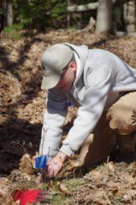 Scientist Nicholas Fisichelli planting a seedling.