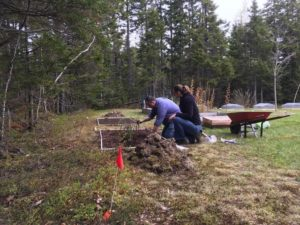 Two people plant seedlings in the dirt of a forest plot.