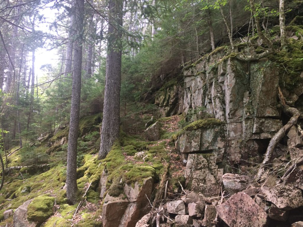 trees and moss on steep rocky cliffs