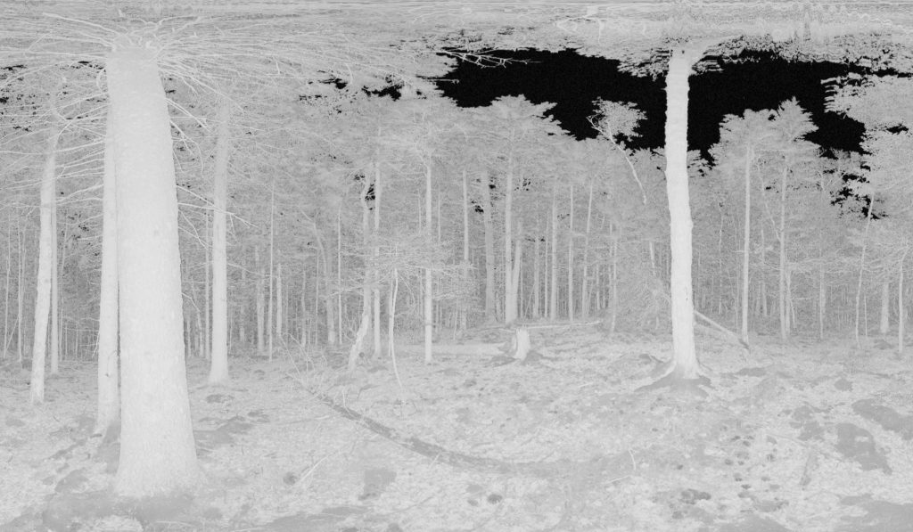 image from laser scan: sky shows black through canopy, trees and vegetation are shades of gray